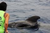 Excursión con delfines y ballenas en Tenerife a bordo de la Bahriyeli