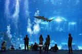 Entrada para niño o adulto a Poema del Mar Aquarium